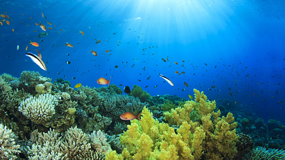 coral-reef-damage-by-sunscreen-pure-living